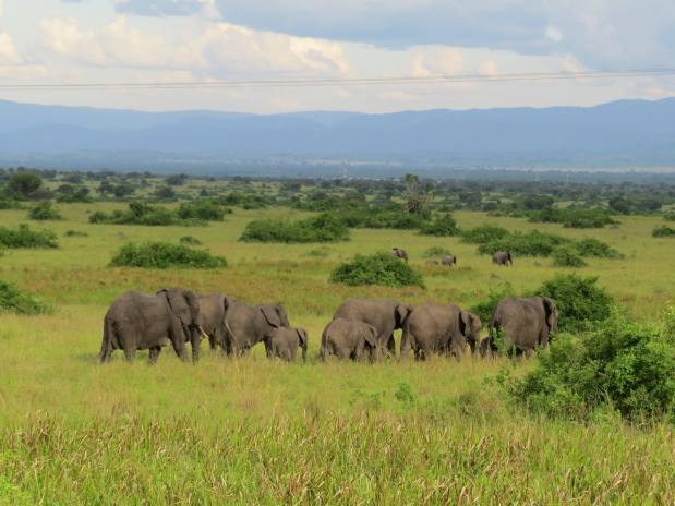 African Safari: Searching for the Big 5 in Uganda
